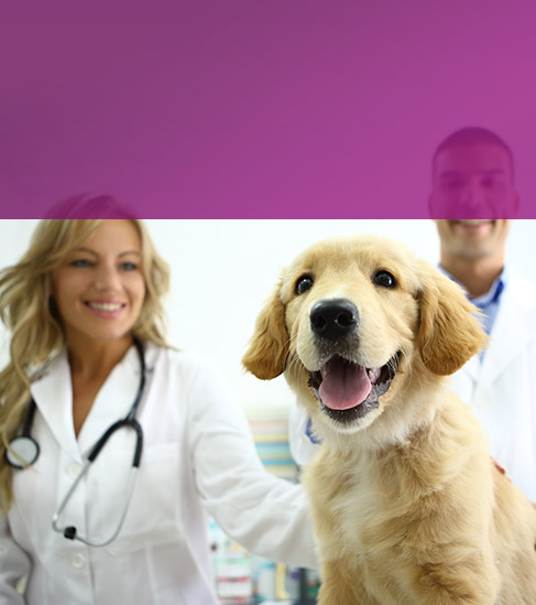 Veterinary Medicine Products Manufacturers